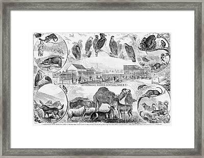 Central Park Zoo, 1866 Framed Print by Granger
