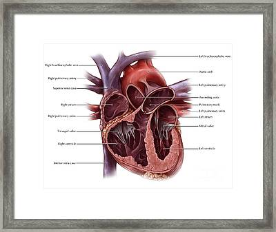 Chambers Of The Heart Framed Print by Evan Oto