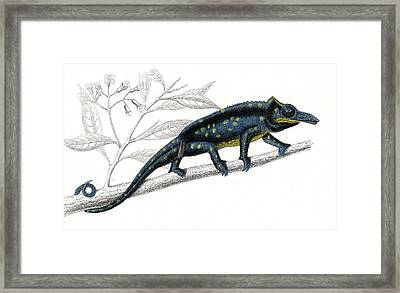 Chameleon Framed Print by Collection Abecasis