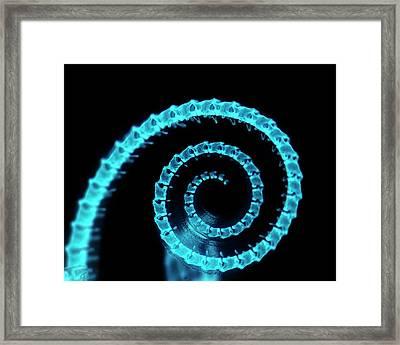Chameleon Embryo Tail Bones Framed Print by Dorit Hockman