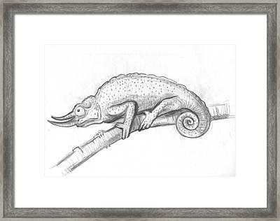 Chameleon Framed Print by Maja  Opacic