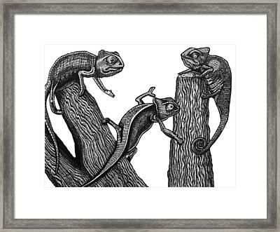 Chameleon Trio Framed Print by Tracey Gurr BA Hons