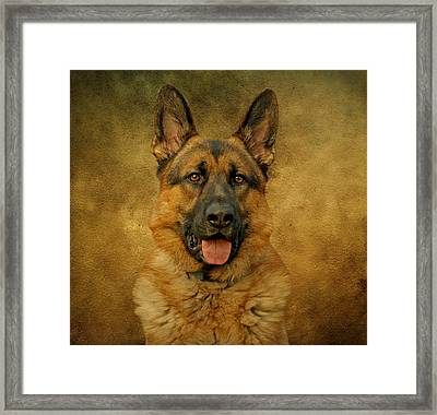 Chance - German Shepherd Framed Print by Sandy Keeton