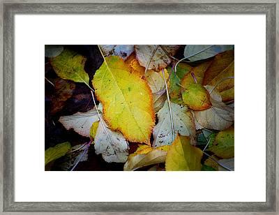 Change Of Season Framed Print by Michelle Wrighton