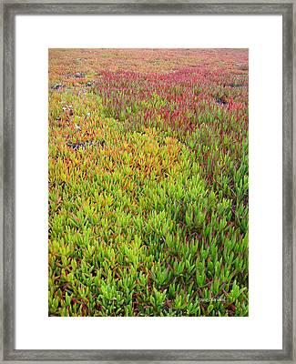 Changing Landscape I Framed Print by Donna Blackhall