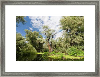Channels In The Danube Delta, Romania Framed Print by Martin Zwick