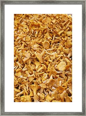 Chanterelle Mushroom Framed Print by Anonymous