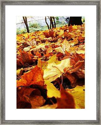 Chaos Framed Print by Lucy D