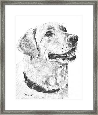Charcoal Drawing Yellow Lab In Profile Framed Print by Kate Sumners