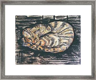 Charcoal Tabby Framed Print by Caroline Street