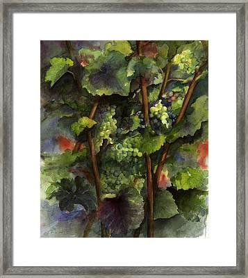 Chardonnay Dans L'ombre Framed Print by Maria Hunt