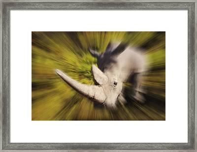 Charging Rhinocerosafrica Framed Print by Thomas Kitchin & Victoria Hurst
