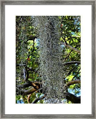 Charleston 012 Framed Print by Lance Vaughn
