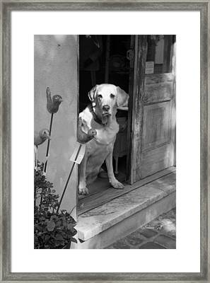 Charleston Shop Dog In Black And White Framed Print by Suzanne Gaff