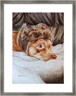 Charlie The Cheeky Chappy Framed Print by Pet Portraits by Julie Bunt