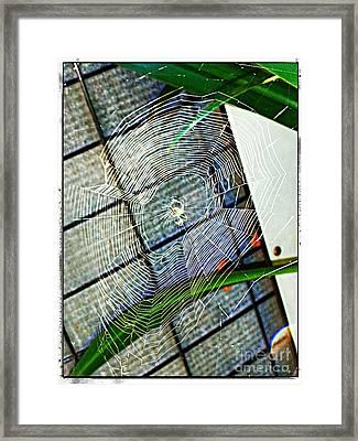 Charlotte's Web Framed Print by Meagan Hoelzer