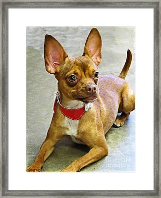 Charm Personality And Good Looks Framed Print by Ella Kaye Dickey