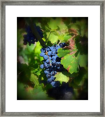 Chateauneuf Du Pape Hidden Treasure Framed Print by Carla Parris