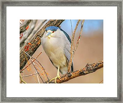 Chin And Cheeks Framed Print by Donna Kennedy