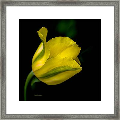 Cheerful Thoughts And Sunshine Framed Print by Julie Palencia