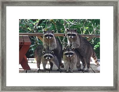 Cheerleading Raccoons Framed Print by Kym Backland