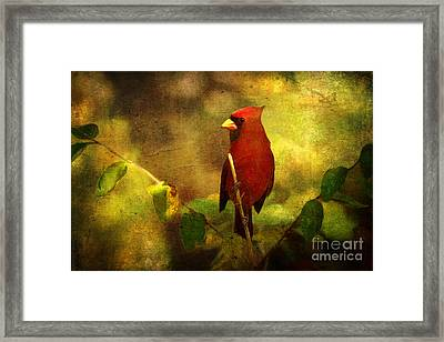 Cheery Red Cardinal  Framed Print by Lianne Schneider
