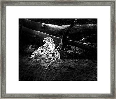 Cheetah Framed Print by Camille Lopez