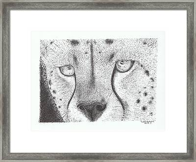 Cheetah Face Framed Print by Todd Hodgins