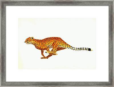 Cheetah Framed Print by Michael Vigliotti