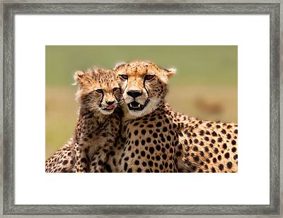 Cheetah Mother And Cub In Masai Mara Framed Print by Maggy Meyer