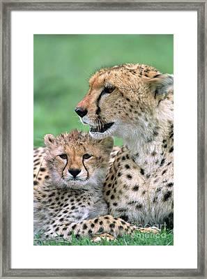 Cheetah Mother And Cub Masai Mara Framed Print by