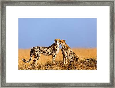 Cheetah Mother With Daughter Masai Mara Framed Print by Maggy Meyer