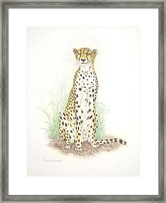 Cheetah On Lookout Framed Print by Dag Sla
