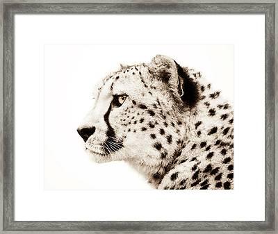 Cheetah Framed Print by Jacky Gerritsen