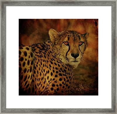 Cheetah Framed Print by Sandy Keeton