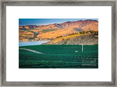 Chelan Vineyard Sunset Framed Print by Inge Johnsson