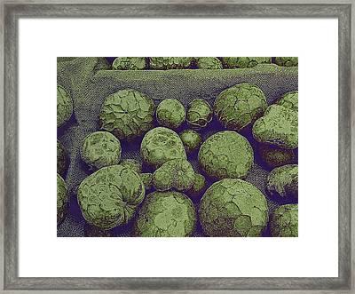 Cherimoya Framed Print by David Pantuso