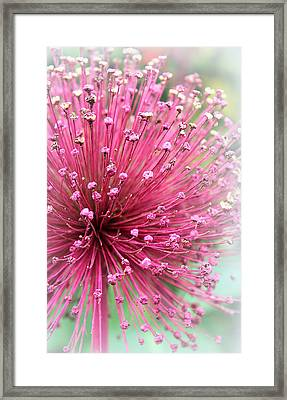 Cherish Framed Print by  The Art Of Marilyn Ridoutt-Greene