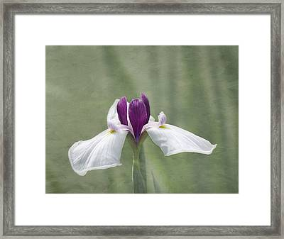 Cherished Framed Print by Kim Hojnacki