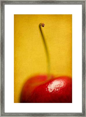Cherry Bliss Framed Print by Amy Weiss