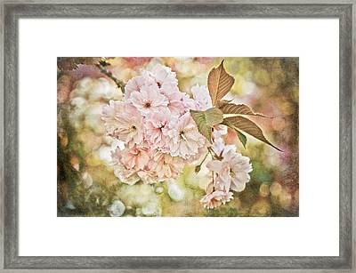 Cherry Blossom Framed Print by Loriental Photography