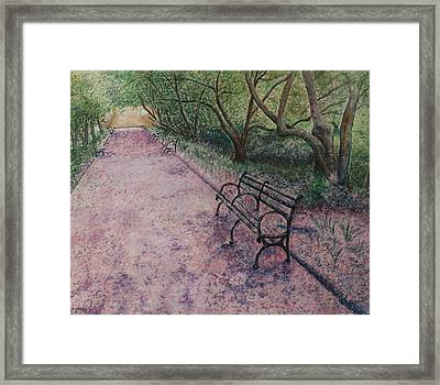 Cherry Blossom Pathway Framed Print by Patsy Sharpe