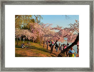 Cherry Blossoms 2013 - 007 Framed Print by Metro DC Photography
