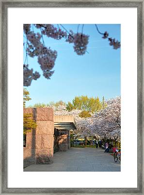 Cherry Blossoms 2013 - 021 Framed Print by Metro DC Photography