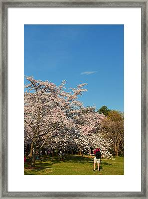 Cherry Blossoms 2013 - 029 Framed Print by Metro DC Photography