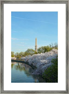 Cherry Blossoms 2013 - 040 Framed Print by Metro DC Photography