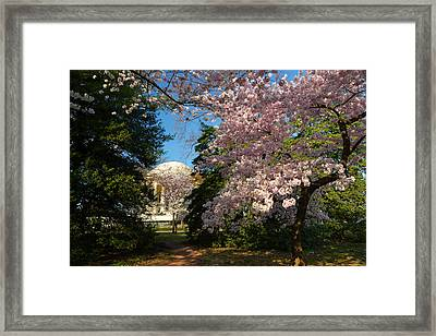 Cherry Blossoms 2013 - 047 Framed Print by Metro DC Photography
