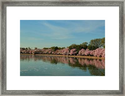 Cherry Blossoms 2013 - 088 Framed Print by Metro DC Photography