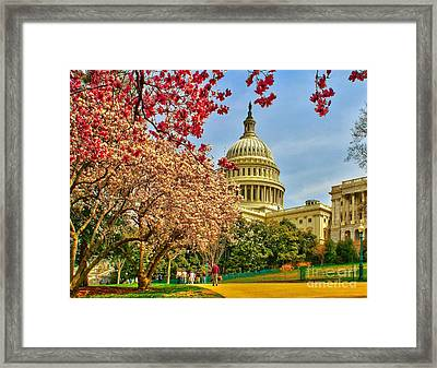 Cherry Blossoms At The Capitol Framed Print by Nick Zelinsky