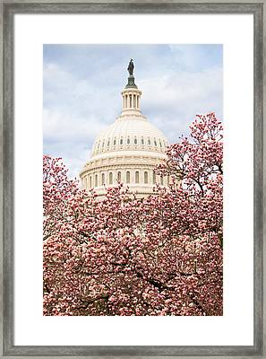 Cherry Blossoms At The Capitol Building Framed Print by Susan  Schmitz